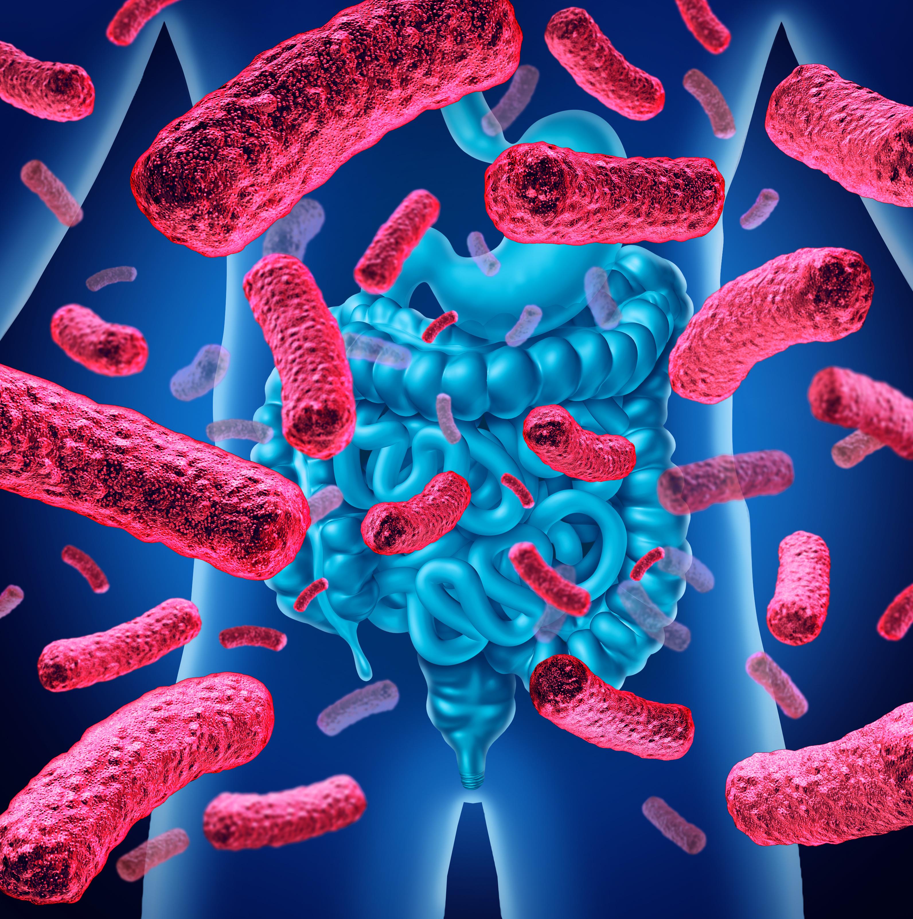 Au centre du processus déclenché par l'excès de graisses alimentaires, des bactéries intestinales spécifiques s'échappent de nos intestins et favorisent la résistance à l'insuline