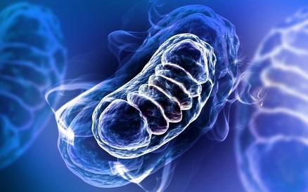 L'étude constate des changements structurels et fonctionnels dans les mitochondries des patients atteints de diabète.